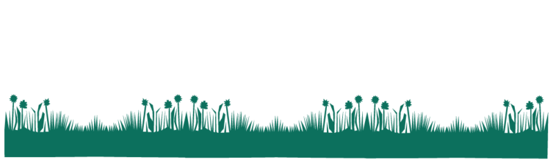 frise herbe